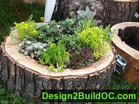 Kako Stvoriti Tree-Stump Planter