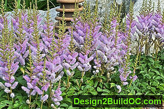 Foliage Garden Ideas